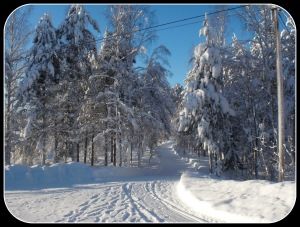 Vintern , januari 2011 005