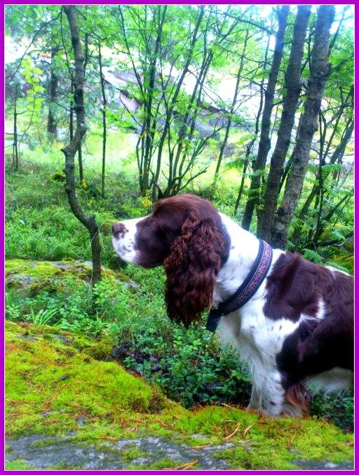 skogens hund